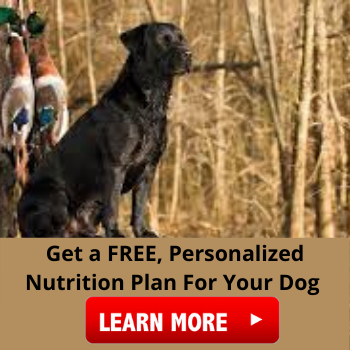 Get A Free Nutrition Plan For Your Dog